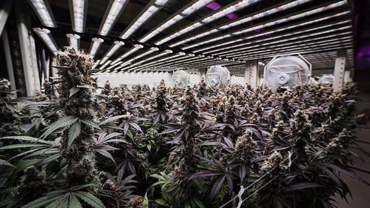 grove medical marijuana warehouse