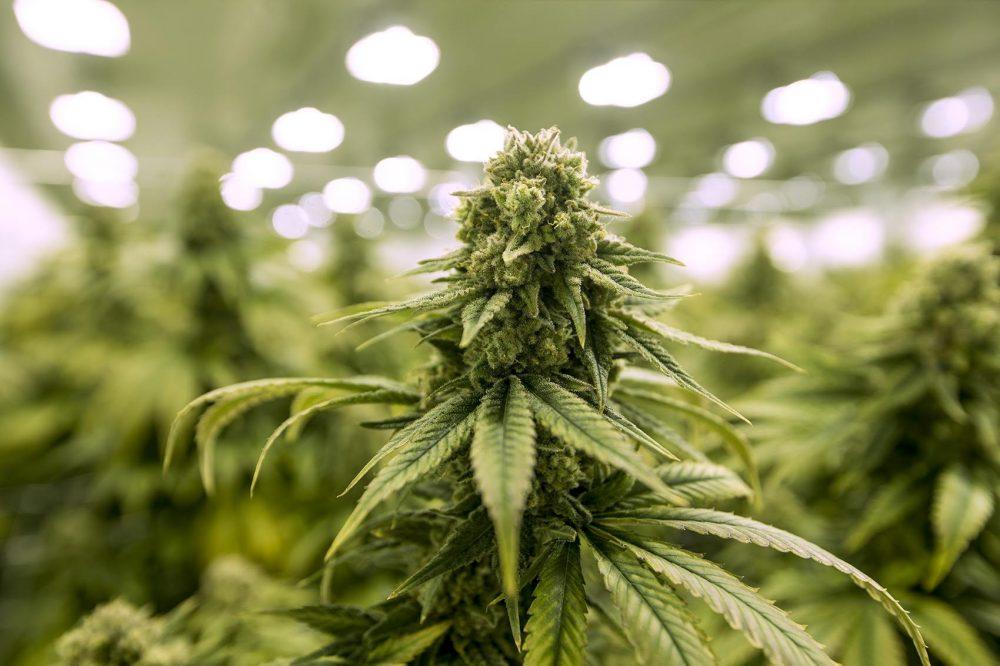 Missouri medical marijuana cannabis THC products